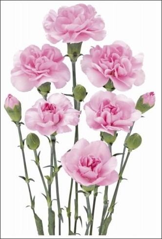 http://www.fuji-plants-sgh.co.jp/images/images/brfgr_hisui_b.jpg