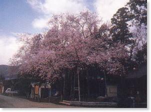 http://www.piconet.co.jp/nippon-net/nippon.cgi/see/12585
