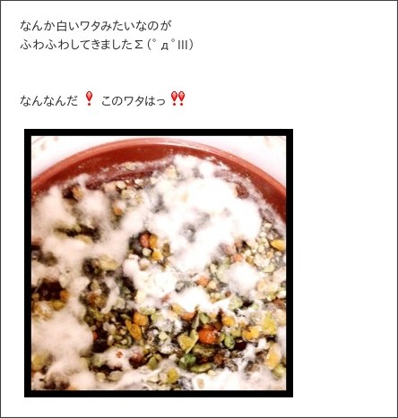 http://ameblo.jp/morningmusume-9ki/entry-11545722561.html