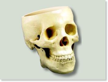 http://spookyburrito.deviantart.com/art/My-empty-trash-skull-5534217