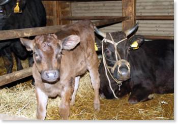 http://www.morioka-times.com/news/2009/0901/02/09010302.htm