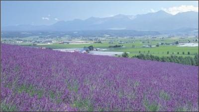 http://www.farm-tomita.co.jp/
