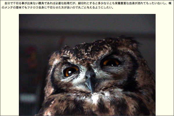 http://ameblo.jp/african-eagle-owl/theme-10001005965.html