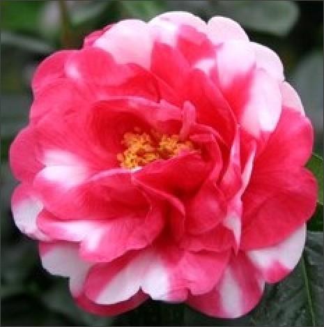 http://aishoren.exblog.jp/17086471/