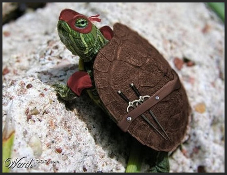 http://www.geekologie.com/2010/06/the_cutest_lil_ninja_turtle_yo.php