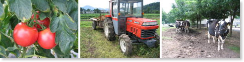 http://www.agr.niigata-u.ac.jp/fc/muramatsu_ST.html