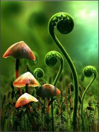 http://mattovermatter.com/wp-content/uploads/2010/10/plants.jpg