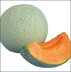 http://www.musaseed.co.jp/sec02/thd01/fou51_melon/melon_velvetqueen.html