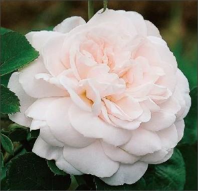 http://www.keihan-engei-gardeners.com/fs/keihangn/1136a