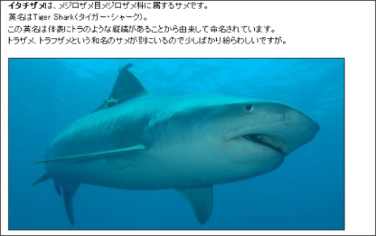 http://tiger-shark.etc64.com/