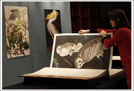 http://www.mirror.co.uk/news/animal-magic/2010/12/08/bird-book-sets-7-3million-world-record-115875-22768826/