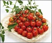 http://www.tohokuseed.co.jp/item/kasai/tomato_02.html