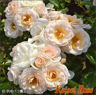 http://ec.keiseirose.co.jp/item/detail/20380