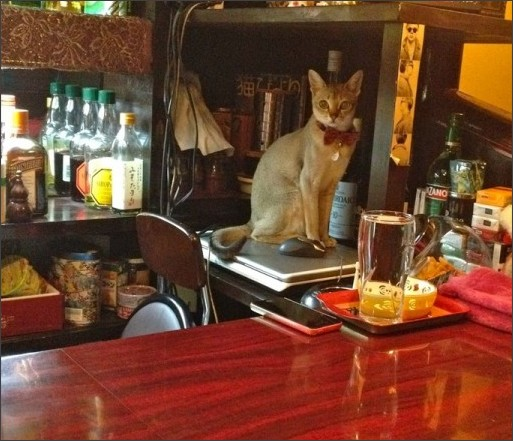 http://livedoor.blogimg.jp/hoshusokho/imgs/9/1/91b58261-s.jpg