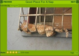 http://www.funnyjunk.com/funny_pictures/8732/Good+Place+For+A+Nap/