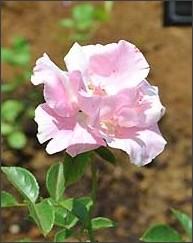 http://www8.shinmai.co.jp/flower/article.php?id=FLOW20140614002283
