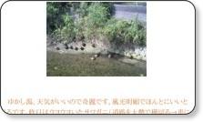 http://ameblo.jp/masakoma/entry-10023646305.html