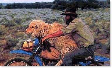 http://www.spotmotorcycles.com/animals/