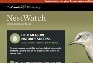 http://nestwatch.org/
