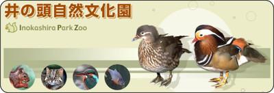 http://www.tokyo-zoo.net/zoo/ino/main.html