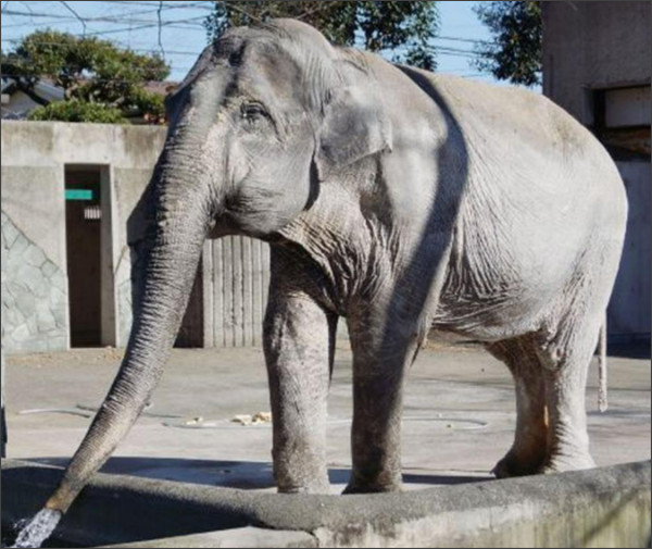 http://www.independent.co.uk/news/world/asia/hanako-elephant-lonely-dies-japanese-zoo-aged-69-a7054021.html
