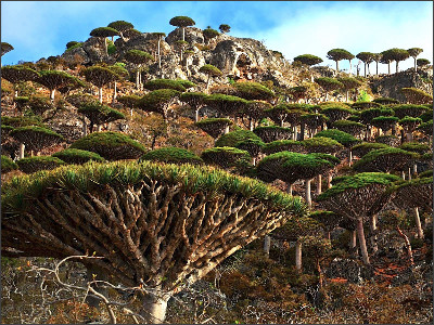 http://static.thousandwonders.net/Socotra.original.1994.jpg