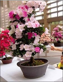 http://images.keizai.biz/nerima_keizai/headline/1464326465_photo.jpg