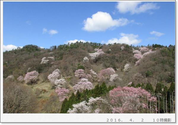 http://kikuzumi3.exblog.jp/