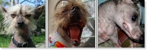 http://www.sonoma-marinfair.org/uglydogvote08.shtml