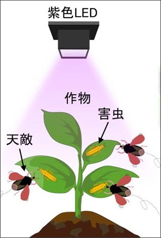 http://www.naro.affrc.go.jp/publicity_report/press/laboratory/nias/071030.html