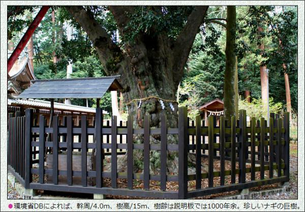 http://www.guitar-mg.co.jp/title_buck/22/amenomiya_jinja_232/nagi.htm