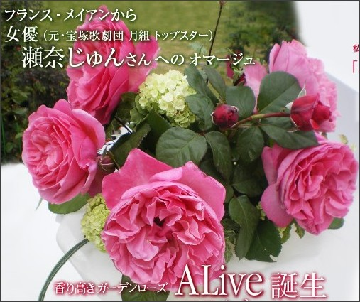 http://ec.keiseirose.co.jp/static/kikaku/plan_141.html