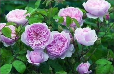 http://aishoren.exblog.jp/17361760/