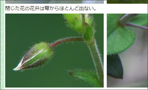 http://matsue-hana.com/hana/miminagusa.html