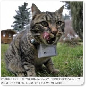 ドイツに写真を撮るネコ、「作品」はネット上で公開 国際ニュース : AFPBB News