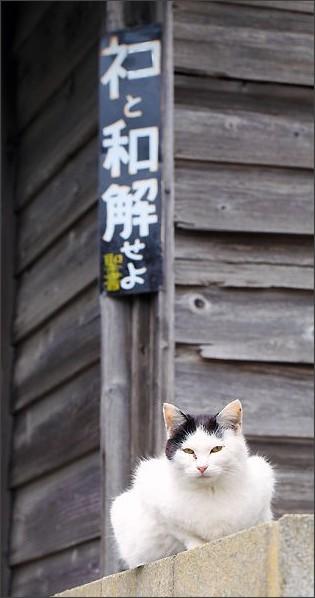 http://livedoor.blogimg.jp/schulze/imgs/c/6/c6e8a0f3.jpg