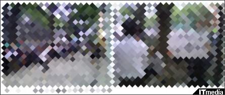 http://plusd.itmedia.co.jp/mobile/articles/0906/18/news053.html