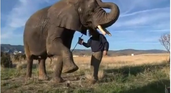http://www.dmaniax.com/2011/10/06/the-african-elephant-durability-test-phase-one/