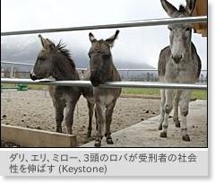 swissinfo - スイスでは、受刑者の社会性を向上させるために動物セラピーが試みられている。