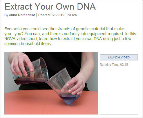 http://www.pbs.org/wgbh/nova/body/extract-your-dna.html