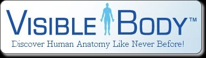 Visible Body | 3D Human Anatomy