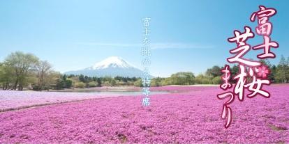 http://www.shibazakura.jp/