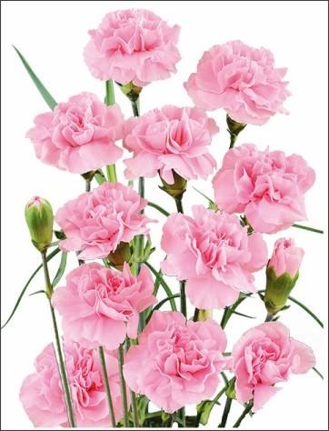 http://www.fuji-plants-sgh.co.jp/images/images/brfgr_wendy.jpg