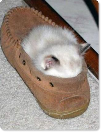 Где спят кошки (17 фото) » Интересное :: Картинки, видео приколы, анекдоты, свежий юмор на ZizA.rU