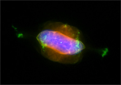 http://www.iaa.es/xpn/pn_files/NGC7009/NGC7009_files/NGC7009_xmm_hst.jpg
