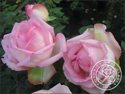 http://shinomiya-rose.com/2009/honore-de-balzac.html