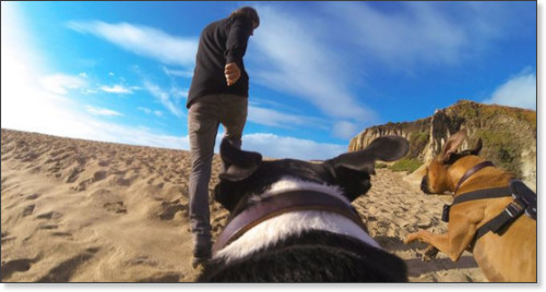 http://shop.gopro.com/mounts/fetch-dog-harness/ADOGM-001.html