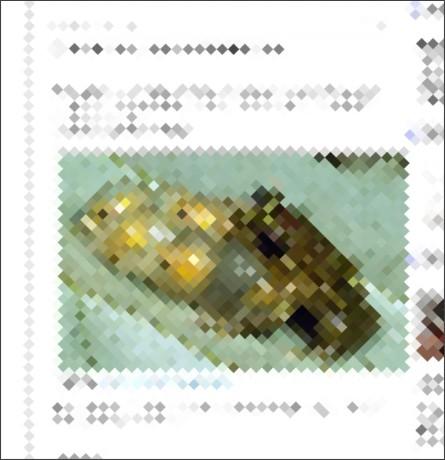 http://zoo0982.blog108.fc2.com/blog-entry-1020.html