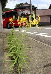 http://www.nagasaki-np.co.jp/news/images/short/2016/07/08/frmShasin_Rougononiyuri.jpg