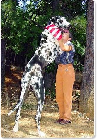 【画像】「大きな犬」と「小さな犬」コンテスト!*おもしろ動物園